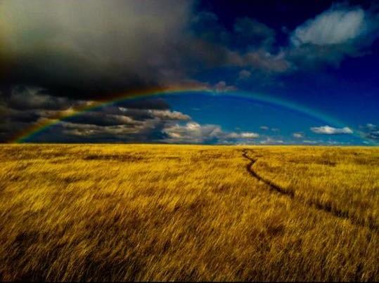 amazing rainbow BN